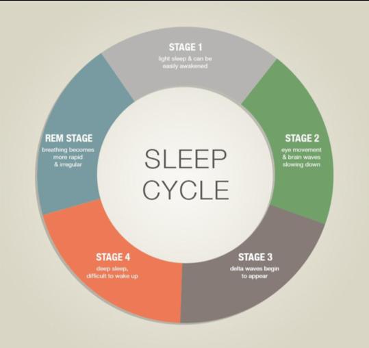 slapen cyclus verschillende fases van slapen