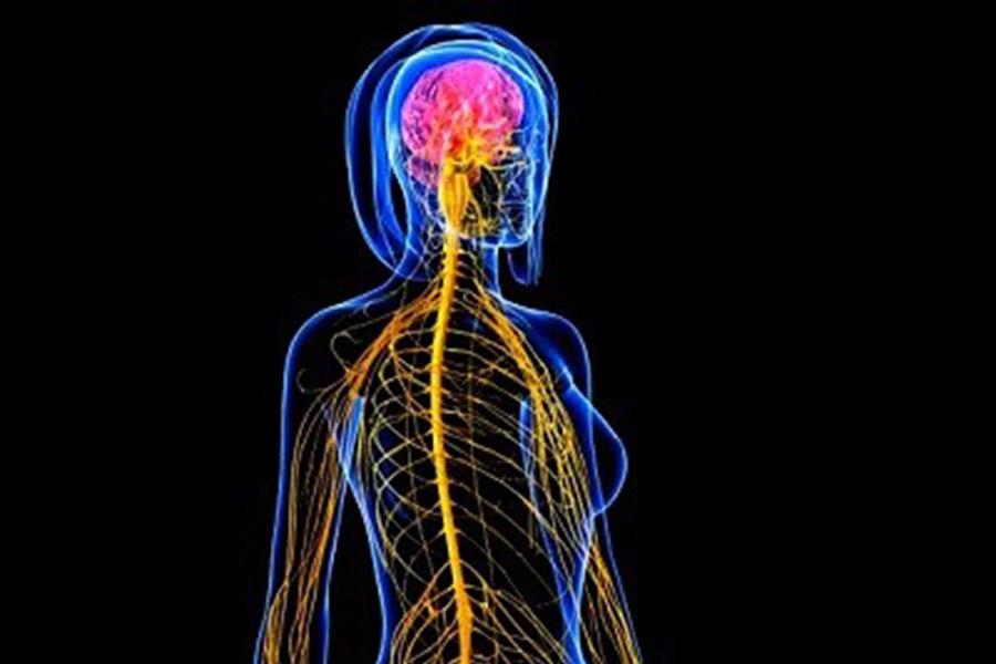 Tijdens de warming-up schakelt je lichaam over naar het Orthosympatisch zenuwstelsel.